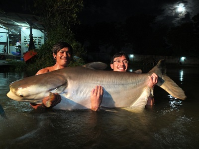 Fishing for Monster Mekong Catfish in Thailand