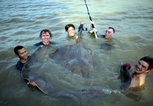 Giant freshwater stingray fishing-Ban-Pakong-River