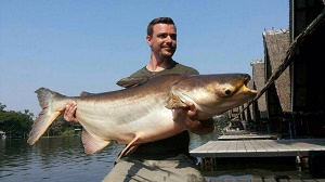 Mekong Catfish Bangkok 2014