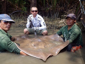 More Stingray fishing Maeklong River