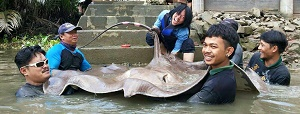 TBS TV Thailand Stingray fishing Mae Klong River