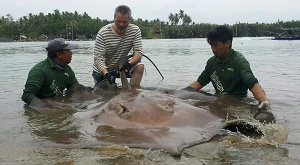 Thailand Stingray fishing news
