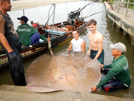 Thailand Stingray fishing