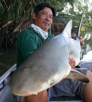 Thailand fishing Bull Sharks and Stingrays