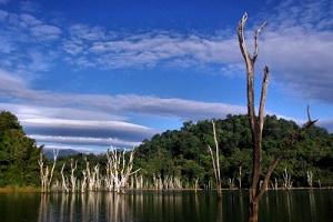 Snakehead fishing holidays Cheow Lan Dam