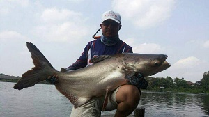 US angler Catfish fishing Bangkok