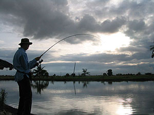 fishing for barramundi fishsiam
