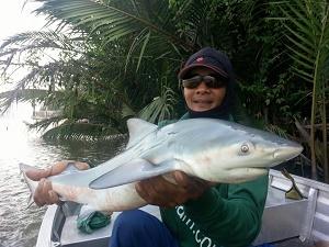 bull shark maeklong river