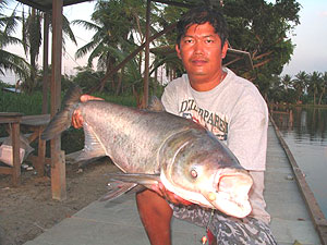 fishing in thailand fishsiam