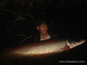 100 kg Arapaima caught fishing in Thailand at Bungsamran Lake