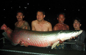 140kg Arapaima fishing IT Lake Thailand