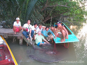 180-200 kg Giant Freshwater Stingray Captured ban Pakong River