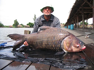 50 kg Giant Siamese Carp caught fishing in Thailand