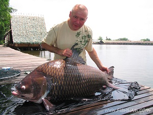 50 kg Giant Siamese Carp whilst carp fishing in Thailand