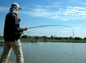 Barramundi fishing at Barramundi Ponds in Thailand