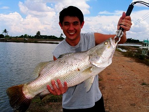 Big Barramundi haul caught lure fishing in Thailand