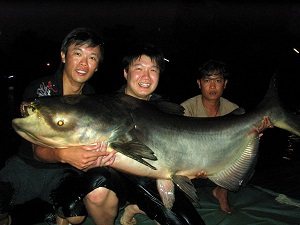 Big Mekong Catfish landed fishing in Bangkok