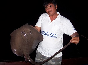 Cow Tail Stingray fishing Ban Pakong Thailand