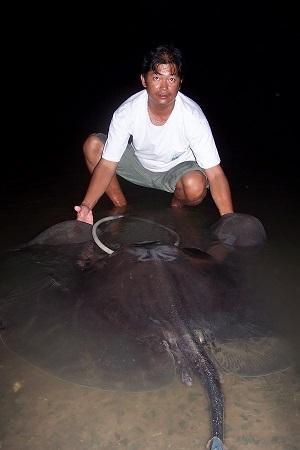 Fishing Giant freshwater stingray Ban Pakong River