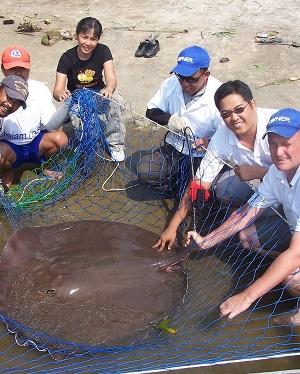 Fishing for Giant freshwater stingray on the Maeklong River
