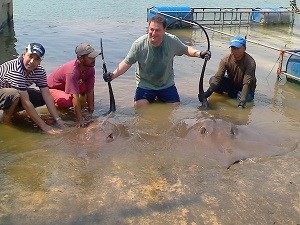 Freshwater Stingray fishing in Thai Rivers