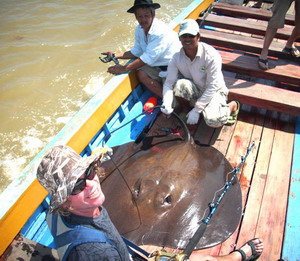 Freshwater stingray fishing Ban Pakong River