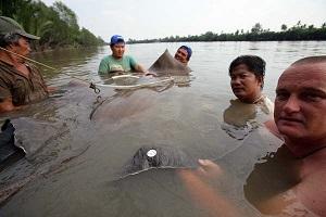 Freshwater stingray fishing Pakong River Thailand