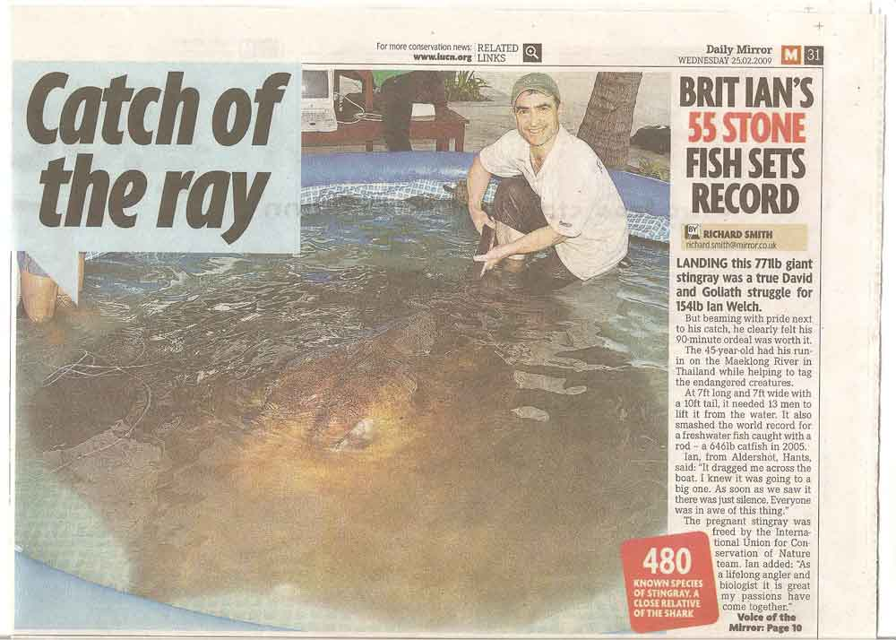 Daily mirror record giant stingray