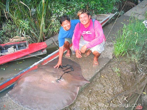 Giant Freshwater Stingray fishing River of the Dragon in Thailand