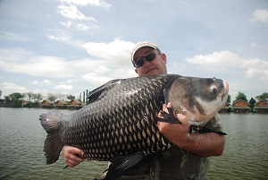 Giant Siamese Carp fishing Thailand