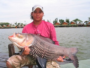 Giant Siamese Carp fishing in Bangkok Thailand