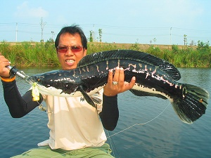 Giant snakehead fishing world Bangkok