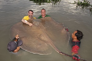Ian Welch Anglers Mail Giant Stingray Maeklong River