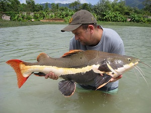 Large Predator haul caught predator fishing Topcats Thailand