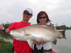 Massive Barramundi caught Barramundi fishing in Thailand