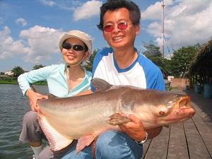 Mekong Catfish haul caught fishing at Bungsamran Lake