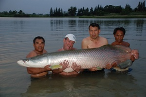 Monster Arapaima caught while Arapaima fishing in Thailand