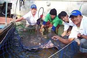 Monster fish Fishing at Palm Tree Lagoon Thailand