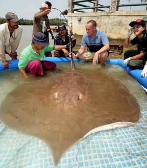 NHK TV Japan stingray fishing Maeklong River Thailand