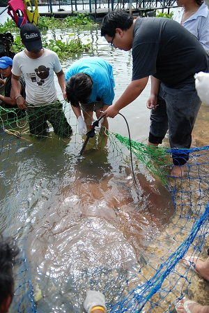 Stingray fishing TBS Japan Maeklong River