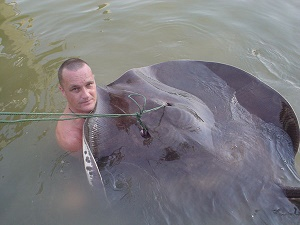 Stingray fishing for prehistoric freshwater fish Ban Pakong River