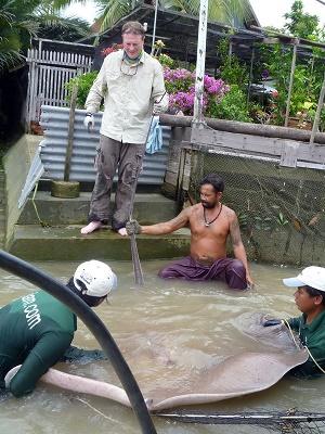 Thai Freshwater Stingray fishing
