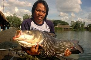 Thai angler banks Giant Siamese Carp brace