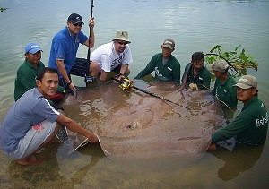 Thailand Big game fishing for Stingrays