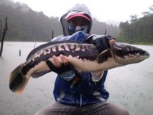Thailand Fishing Snakehead Khao Laem Dam
