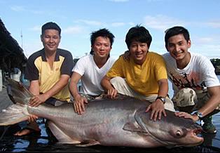 Mekong Catfish Bungsamran