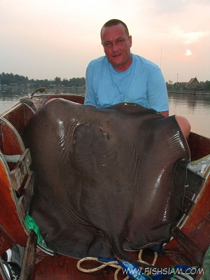 Thailand Giant Freshwater Stingray fishing at Maeklong River