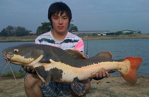 Thailand Predator Fishing at IT
