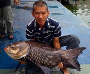 Thailand carp fishing Bangkok