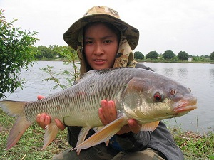 Thailand carp fishing at Bung Buk produces Thai carp species